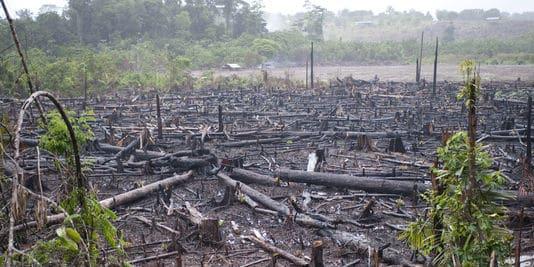 1272068_3_4009_en-amazonie-la-deforestation-contribue-au_cfba2b68d86754d9f096336d494927d0